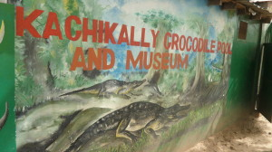 crocodile pool and museum in Kachikally Gambia